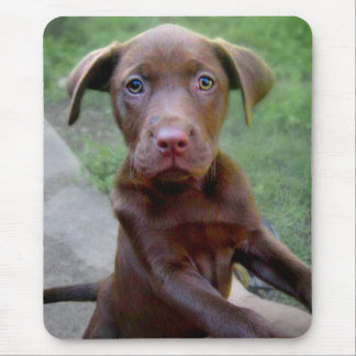 Chocalate Labrador Pittie Puppy Exploring Mouse Pad