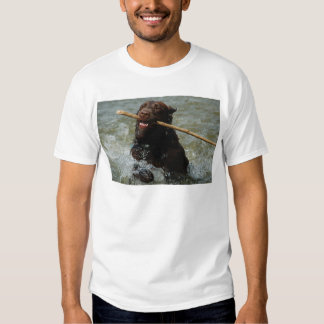Chocloate Lab T Shirt