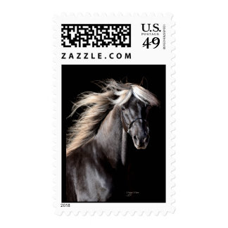 Choco Rocky Mountain Horse Stamp