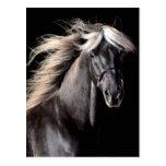 Choco Rocky Mountain Horse Postcard