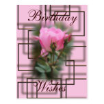 Chocolate and Knockout Rose Postcard- customize it