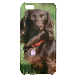 Chocolate and Tan Long-haired Miniature Dachshund Cover For iPhone 5C