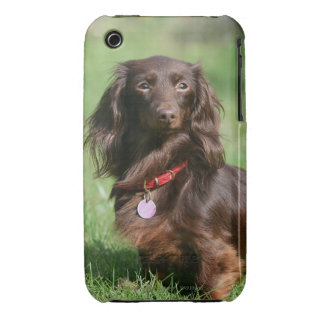 Chocolate and Tan Long-haired Miniature Dachshund iPhone 3 Case