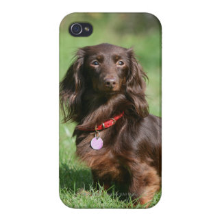 Chocolate and Tan Long-haired Miniature Dachshund iPhone 4 Case