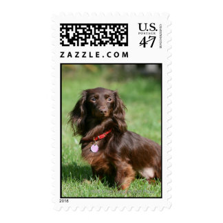 Chocolate and Tan Long-haired Miniature Dachshund Postage