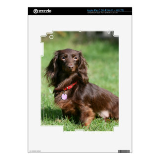 Chocolate and Tan Long-haired Miniature Dachshund Skin For iPad 3