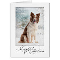Chocolate Border Collie Christmas Card