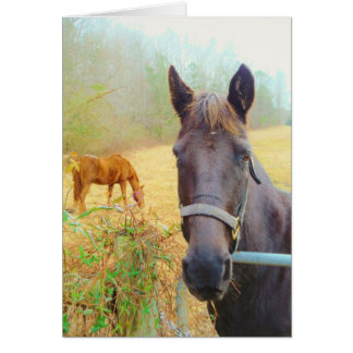 Chocolate Brown horse Cards