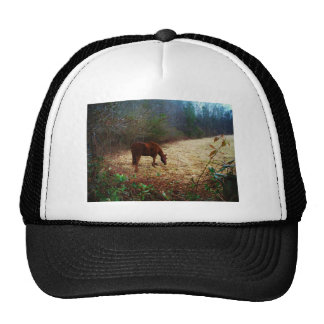 Chocolate  Brown horse Hats