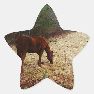 Chocolate  Brown horse Star Sticker