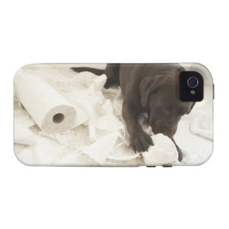 Chocolate brown labrador. vibe iPhone 4 cases
