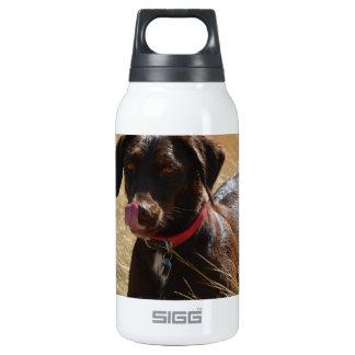 Chocolate Brown Labrador Retriever Insulated Water Bottle