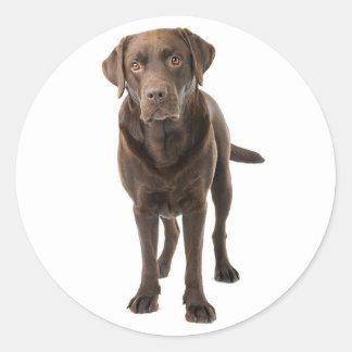 Chocolate Brown Labrador Retriever Puppy Dog Classic Round Sticker