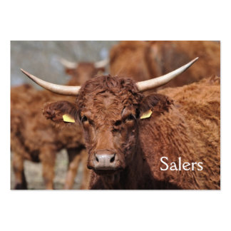 Chocolate brown Salers cow Large Business Card