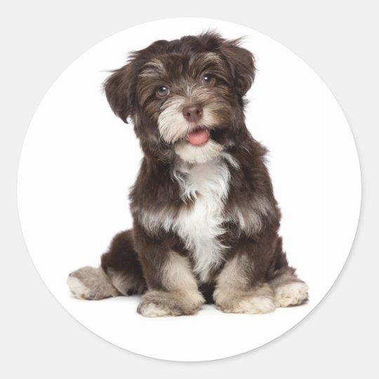 3789b759d620 Chocolate Brown   White Havanese Puppy Dog Sticker