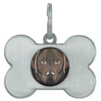 Chocolate clásico Labrador Placa Mascota