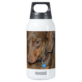 Chocolate Dachshund Insulated Water Bottle