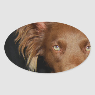 Chocolate dog oval sticker