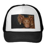 Chocolate dog trucker hat