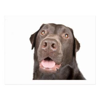 Chocolate feliz Labrador Postal