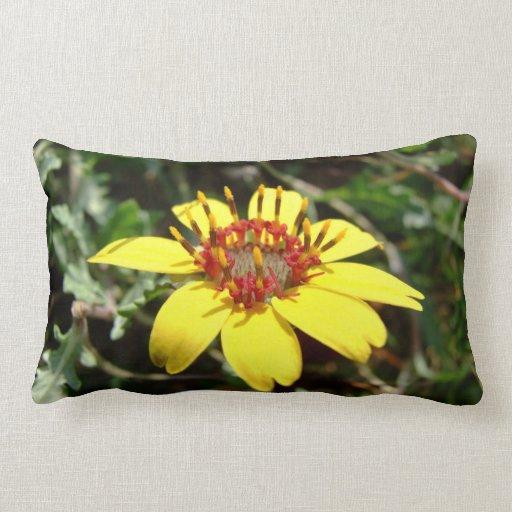 Chocolate flower Berlandiera lyrata yellow Throw Pillows