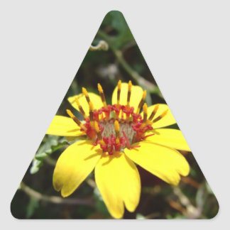 Chocolate flower Berlandiera lyrata yellow Triangle Sticker