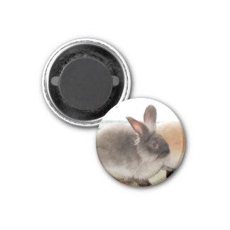 Chocolate French Angora Rabbit Bunny Photo Design 1 Inch Round Magnet
