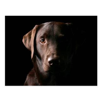 Chocolate imponente Labrador Postal