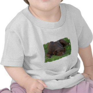 chocolate-lab-24.jpg shirts