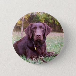 Chocolate Lab Button