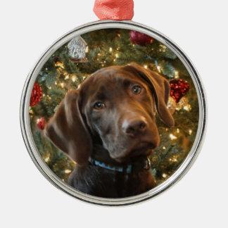 Chocolate Lab Christmas Ornament