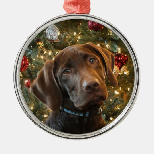 Chocolate Lab Christmas Ornament - Chocolate Lab Christmas Ornament Zazzle.com