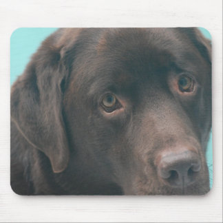 Chocolate Lab Dog Mouse Pad