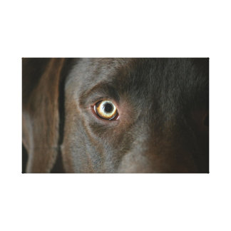 Chocolate Lab Eyes Canvas Gallery Wrapped Canvas