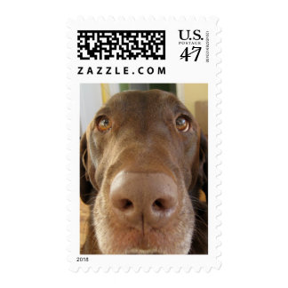 Chocolate lab face, stamp two