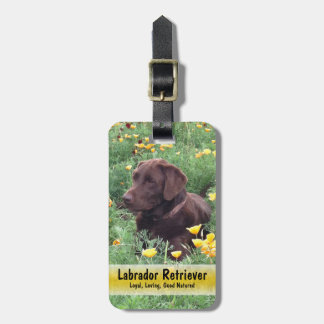Chocolate Lab in California Poppy Patch Bag Tag