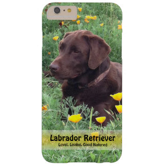 Chocolate Lab in California Poppy Patch Barely There iPhone 6 Plus Case