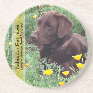 Chocolate Lab in California Poppy Patch Drink Coaster