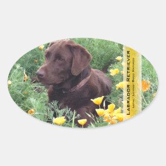 Chocolate Lab in California Poppy Patch Oval Sticker