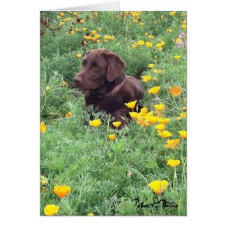 Chocolate Lab In California Poppy Patch Photograph Card