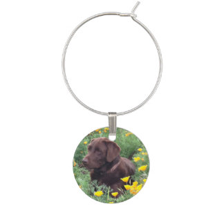 Chocolate Lab In California Poppy Patch Photograph Wine Glass Charm