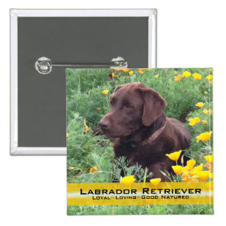 Chocolate Lab in California Poppy Patch Pinback Button