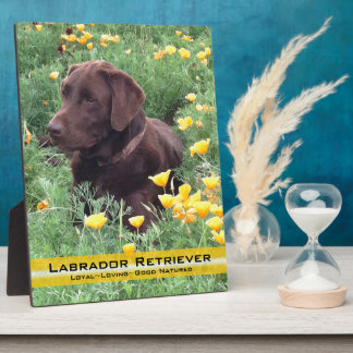 Chocolate Lab in California Poppy Patch Plaque