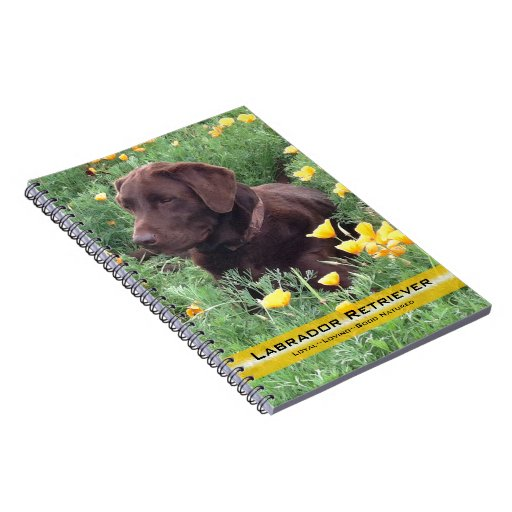 Chocolate Lab in California Poppy Patch Spiral Notebook