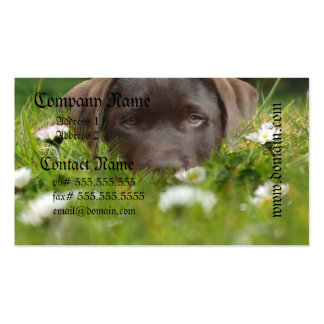 Chocolate Lab in Daisies Business Cards