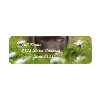 Chocolate Lab in Daisies  Mailing Labels