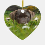 Chocolate Lab in Daisies  Ornament