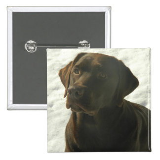 Chocolate Lab in The Snow Pinback Buttons