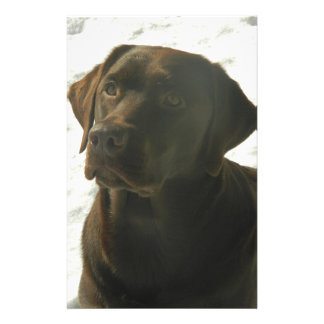 Chocolate Lab in The Snow Stationery
