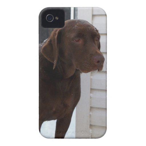 Chocolate Lab iPhone Case iPhone 4 Case-Mate Cases